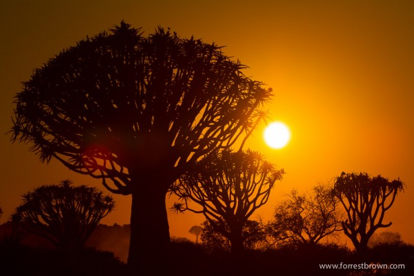 Quiver Tree forest near the town of Keetmanshoop, Namibia.
